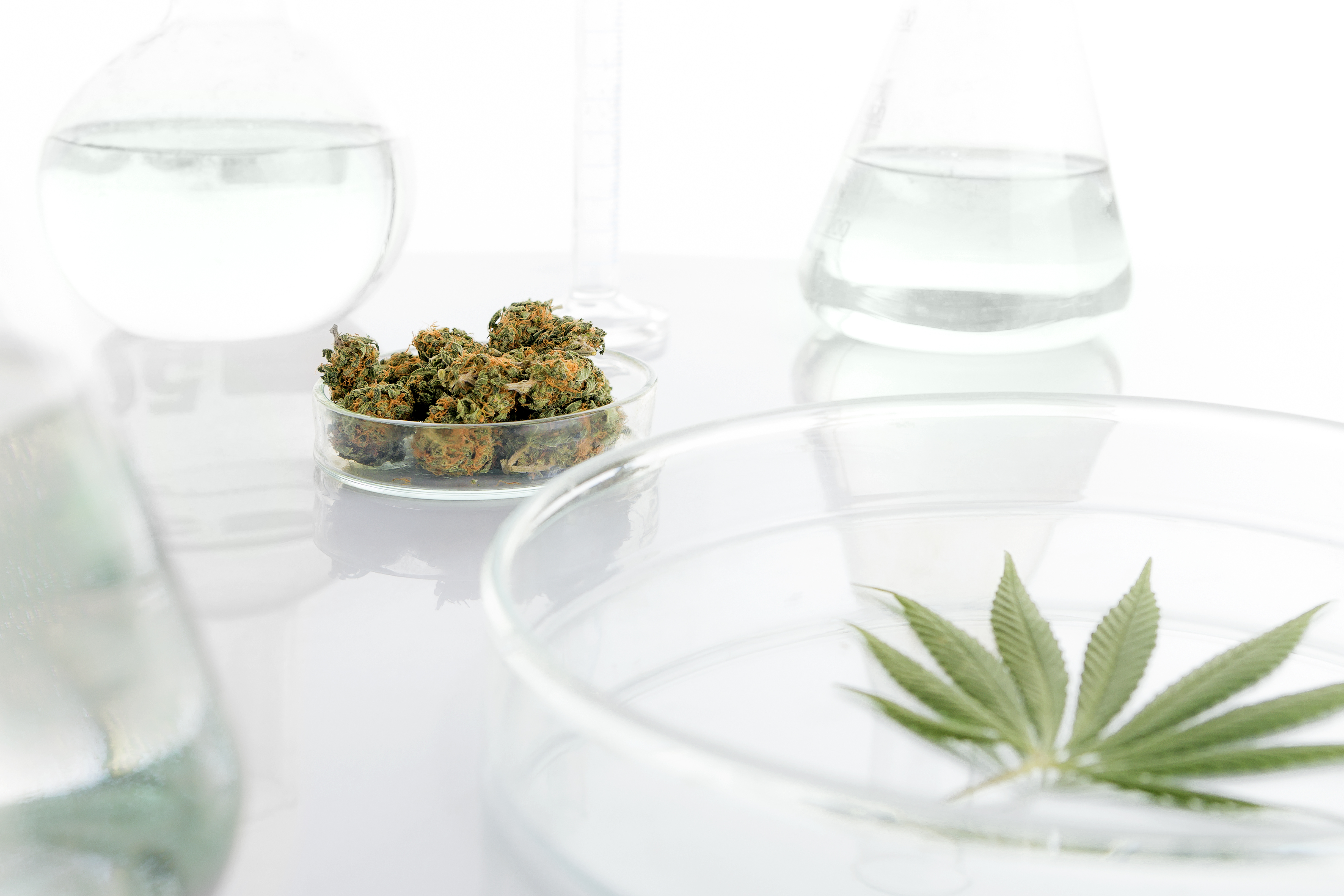 cannabis-in-laboratory