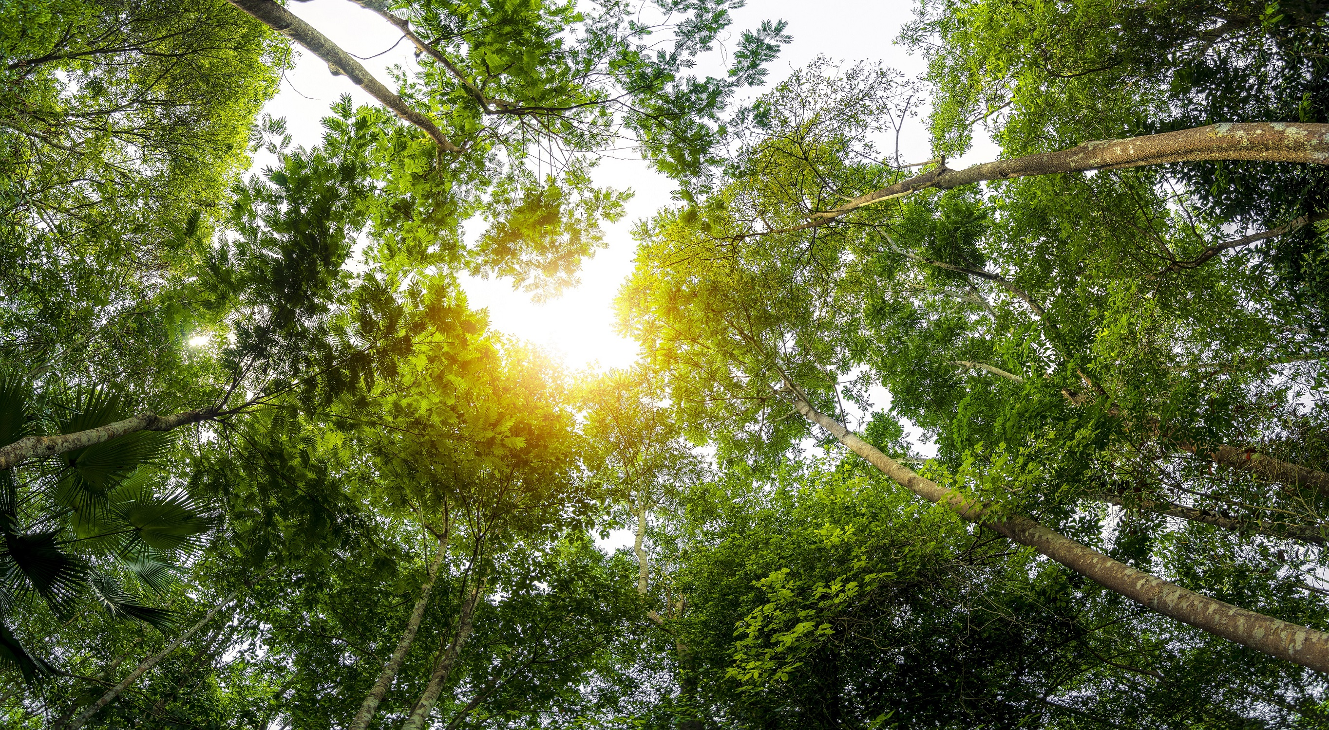 concept-of-earth-protection-day-or-environmental-protection-hands-to-protect-the-growing-forest